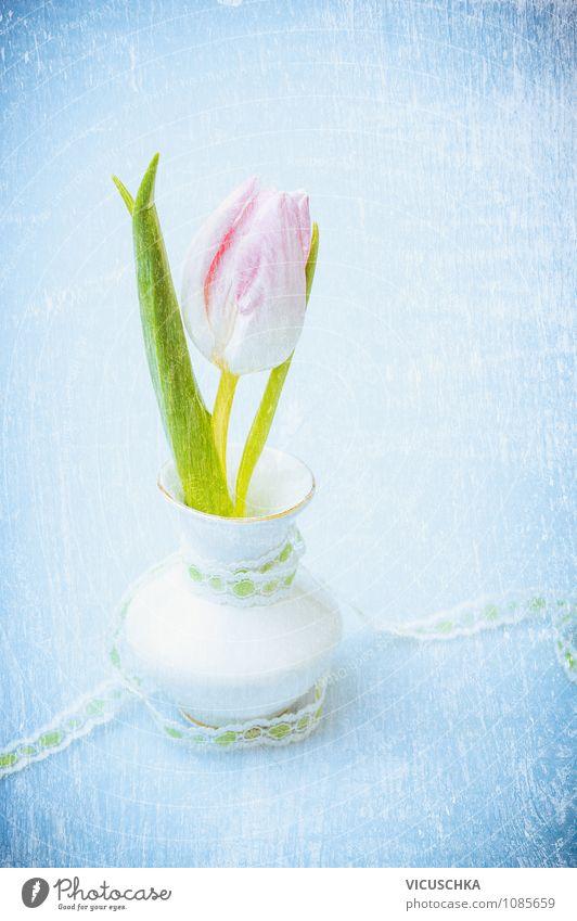 Pink Tulpe in kleine Vase auf Blau Natur blau Pflanze weiß Blume Leben Liebe Innenarchitektur Frühling Stil Feste & Feiern Hintergrundbild Garten rosa Design Dekoration & Verzierung