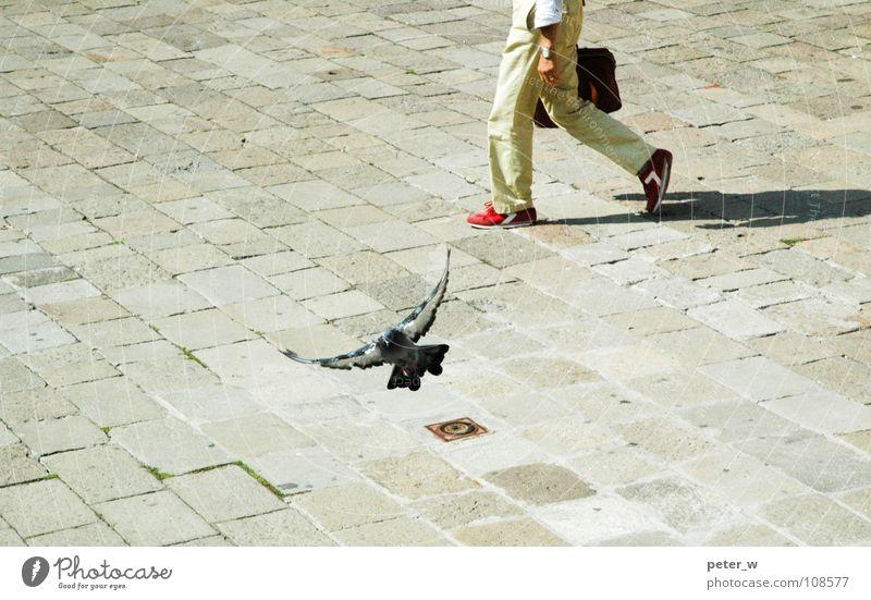 Venedig Italien Stadt Fußgänger Fußgängerzone Taube Vogel Tier Gully Schuhe Koffer Aktenkoffer rot gehen Bewegung mediterran Sommer Verkehrswege Straße Mensch