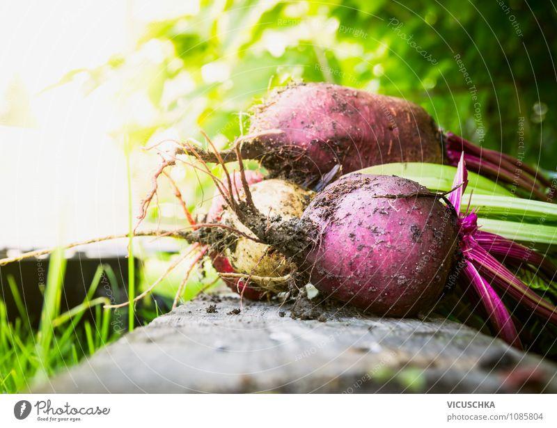 Rote Beete Bündel im Garten Natur grün Sommer Gesunde Ernährung Leben Farbstoff Hintergrundbild Lebensmittel Freizeit & Hobby Gemüse Ernte Bioprodukte Diät