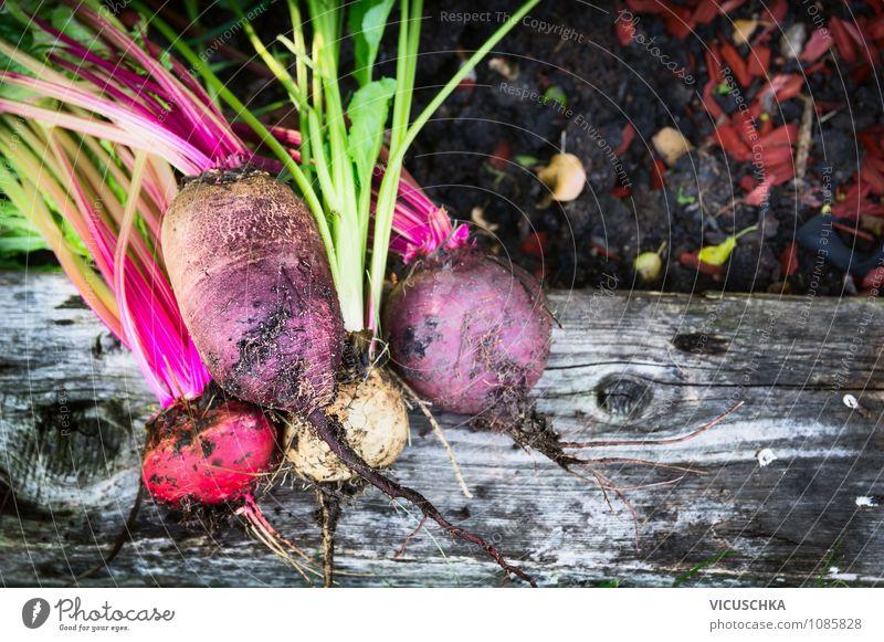 Rote Bete Sorten im Garten Lebensmittel Gemüse Ernährung Lifestyle Gesunde Ernährung Natur Pflanze Sommer Herbst Design Beet red Rote Beete Rüben Variationen