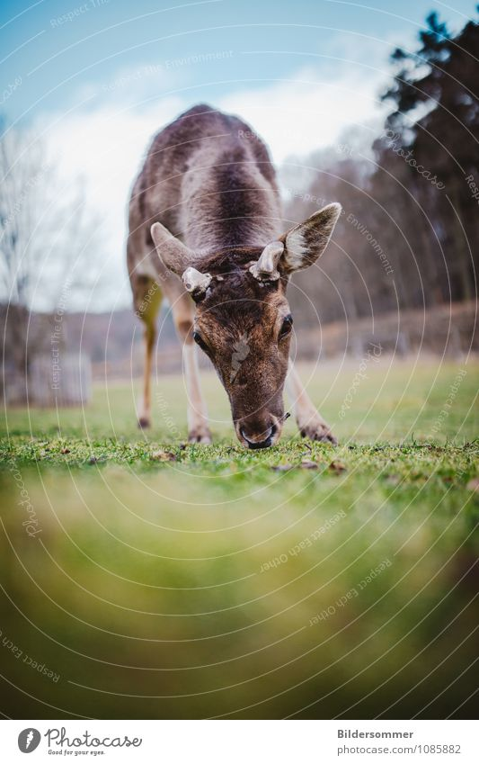. Natur blau grün Baum Tier Wald Tierjunges Umwelt Wiese braun Park Angst Wildtier beobachten Neugier nah