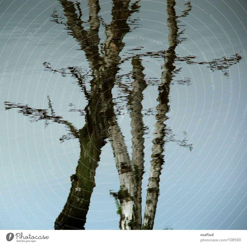 Verwandlung Natur Wasser schön Himmel weiß Baum grün blau Herbst Tod grau braun Vergänglichkeit Baumstamm untergehen Verzerrung
