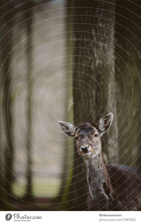 fragt sich, wer hier neugieriger war :) grün Baum Tier Wald grau braun Wildtier stehen beobachten niedlich Freundlichkeit Neugier entdecken Zoo Interesse