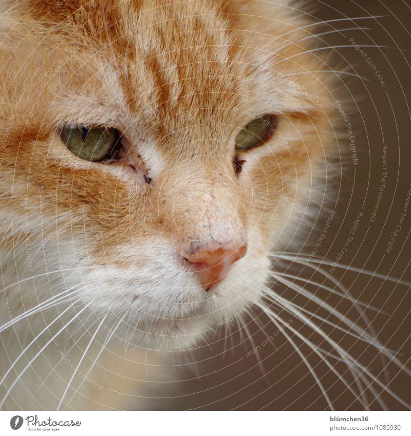 Ich sehe was, was Du nicht siehst... Tier Haustier Katze Tiergesicht Fell beobachten Blick warten schön natürlich rothaarig Wachsamkeit Neugier niedlich weich