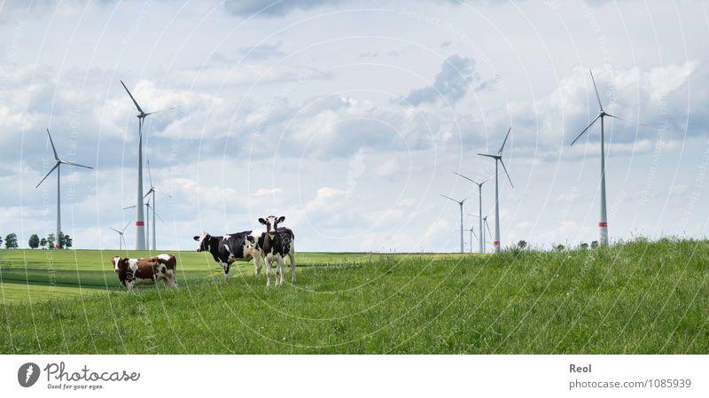 Im Feld Himmel Natur grün Landschaft Wolken Tier Wiese Gras natürlich Horizont Energiewirtschaft Luft Wind Tiergruppe Schönes Wetter