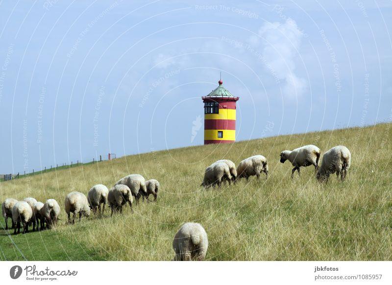 Arschparade Himmel Natur Sommer Landschaft Tier Umwelt Küste Tiergruppe Schönes Wetter Turm Hügel Weide Nordsee Umweltschutz Schaf Leuchtturm