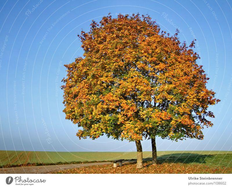 Colours Himmel blau schön Baum Farbe Blatt ruhig Wiese Wärme Herbst Feld ästhetisch stehen einzeln Vergänglichkeit fallen