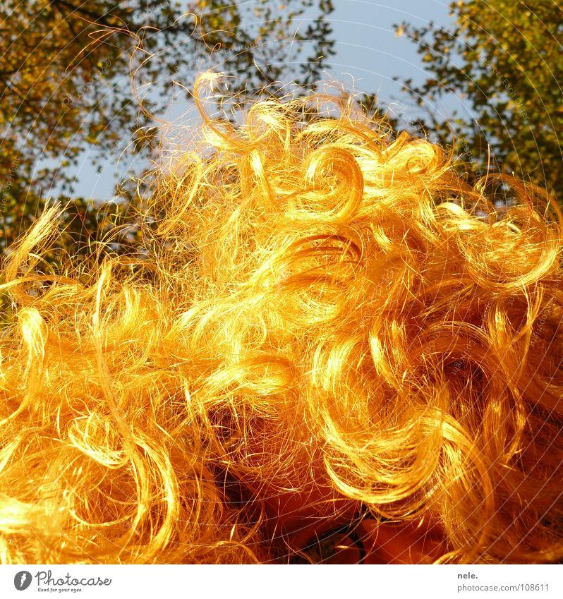 haare gehen immer Himmel Natur Baum Sonne Freude Herbst Haare & Frisuren Lampe blond Brille Locken schimmern Haarspliss