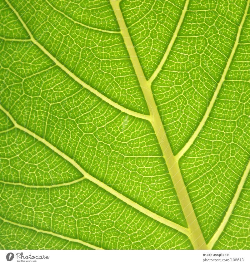 blattgrün Natur Pflanze Blatt Farbstoff Umwelt Energiewirtschaft ökologisch Material Bioprodukte Biologische Landwirtschaft Prozess Photosynthese Blattgrün