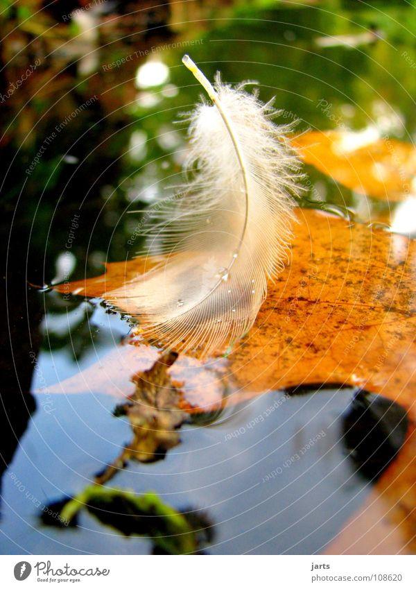 Feder See Blatt Herbst fein weiß Vogel Wassertropfen mehrfarbig ruhig leicht Park jarts