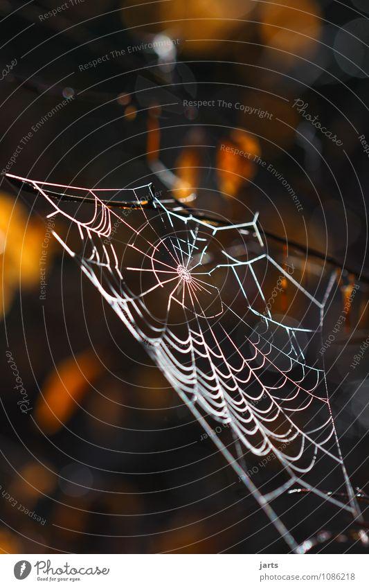 dauerelastisch und schön Pflanze Tier Baum Blatt Wald Spinne fest Natur Netz Spinnennetz Farbfoto Außenaufnahme Nahaufnahme Menschenleer Textfreiraum oben