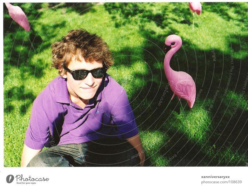 Andy Flamingo springen Wärme rosa Dekoration & Verzierung Physik