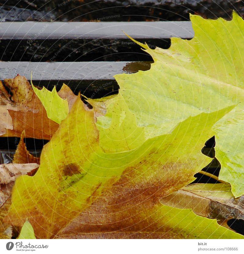BLÄTTERFALLE Blatt gelb Ferne kalt Herbst Wege & Pfade braun liegen fallen Stengel Bürgersteig verloren Wiederholung beige Gully gelehrt