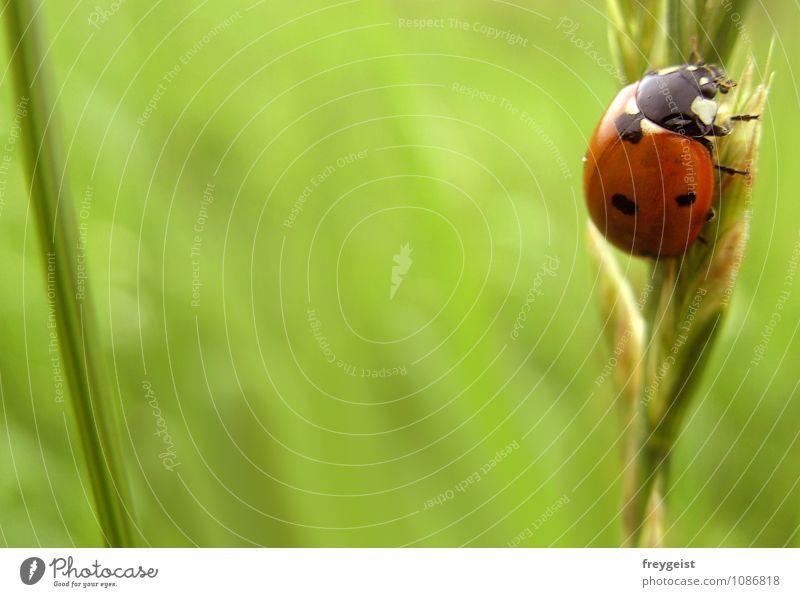 Bug on tour Natur Sommer Tier Umwelt Gras Frühling Glück Käfer