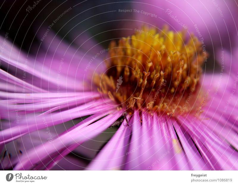 Pink tenderness Natur Pflanze schön Farbe Erholung Blume ruhig Tier Umwelt gelb rosa orange Lebensfreude Blühend Warmherzigkeit violett