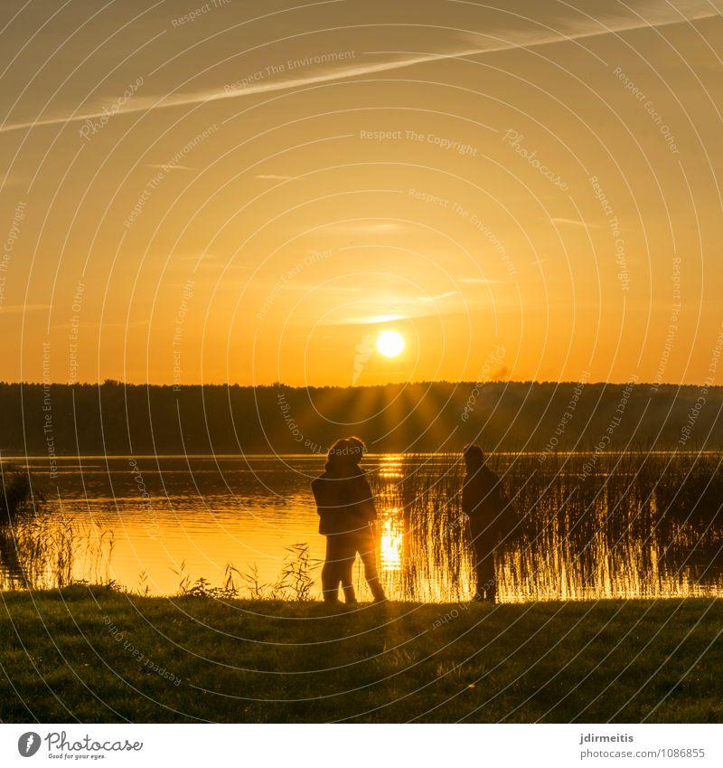 Abend am See Freizeit & Hobby Ferien & Urlaub & Reisen Ausflug Sommer Sommerurlaub Sonne Umwelt Natur Landschaft Wasser Himmel Sonnenlicht Baum Gras Park Wiese