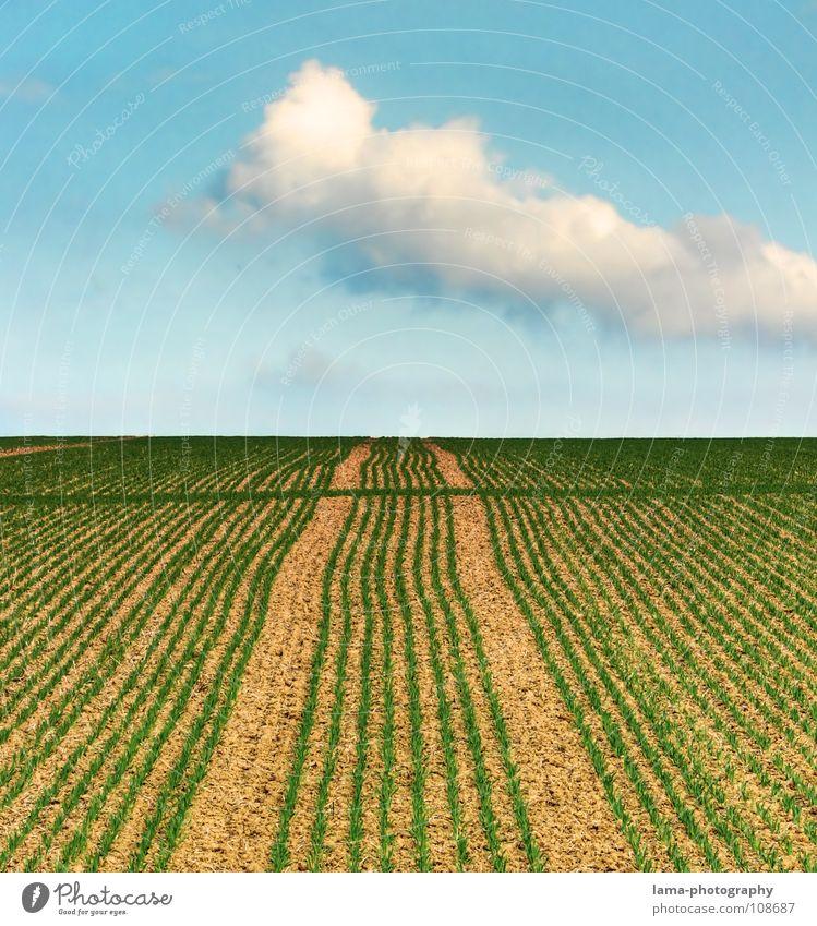 A long way to heaven Wolken Wind sprießen Wachstum gedeihen keimen austreiben grünen Feld braun gepflügt Frühling Kontrast Landwirtschaft Spuren Spurrinne