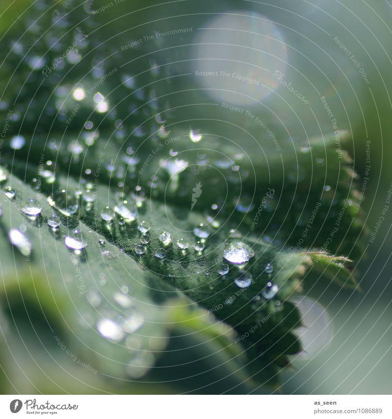 Grünes Glitzern Natur Pflanze schön grün Farbe Wasser Sommer Blatt Umwelt Leben Frühling Garten glänzend Regen Wetter Wachstum