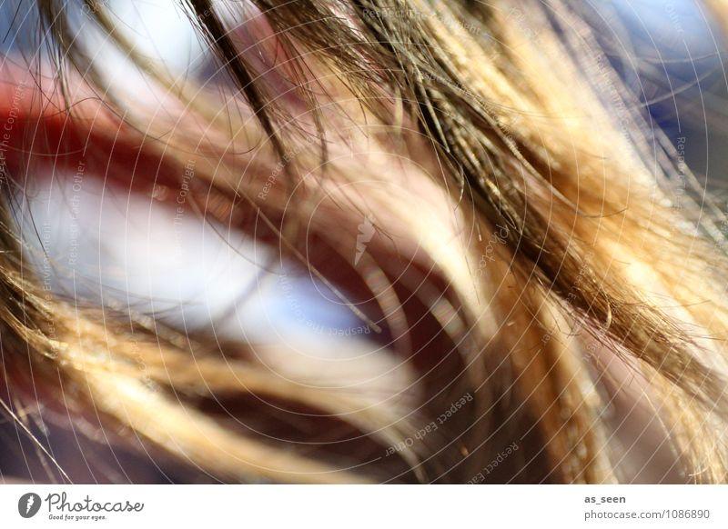 Haare im Wind Haare & Frisuren Umwelt Natur Luft Sonne Frühling Sommer Schönes Wetter brünett blond langhaarig Behaarung Erholung genießen hängen leuchten