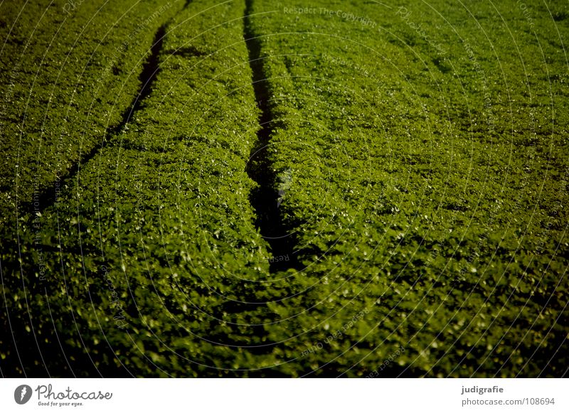 Acker grün Farbe Linie braun Feld Wellen Erde Bodenbelag Spuren Hügel Landwirtschaft Ernte Traktor Aussaat Fahrbahn