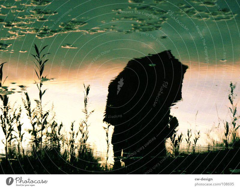 Schirmherrschaft Frau Mensch Mann blau Wasser weiß Sonne Freude Wolken schwarz Herbst dunkel Graffiti Gras Lampe Park
