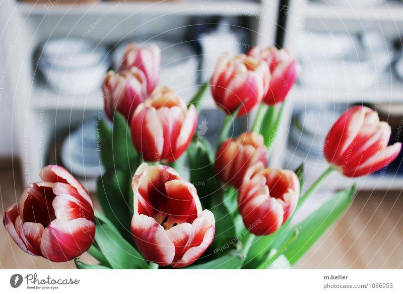 Tulpenstrauß Pflanze Blume Blatt Freude Haus Gefühle Blüte Stil Glück Garten Stimmung Wohnung Zufriedenheit Häusliches Leben Dekoration & Verzierung Kraft