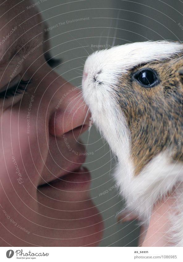 Mensch und Tier Mädchen Jugendliche Gesicht 1 Haustier Tiergesicht Fell Krallen Zoo Streichelzoo Meerschweinchen Nagetiere Schnurrhaar Auge Kommunizieren