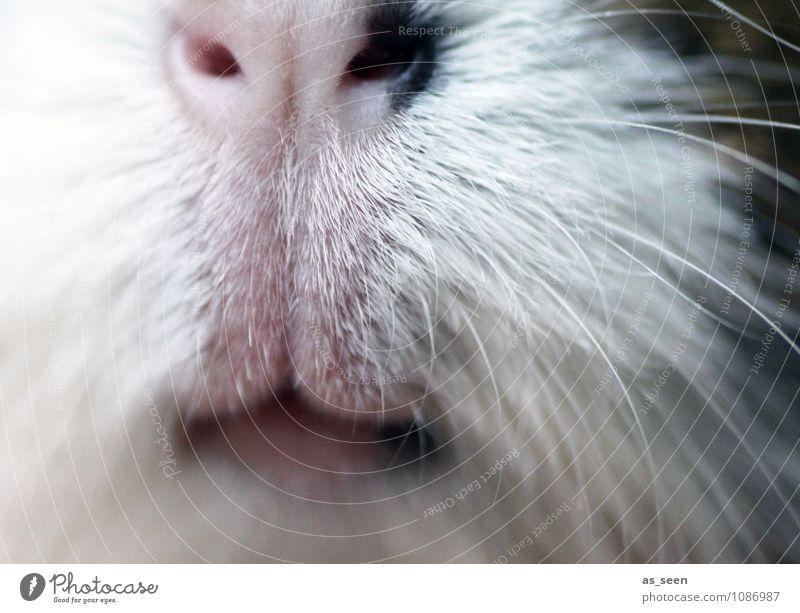 Schnute weiß Freude Tier Gefühle braun Kreativität niedlich weich einzigartig Lippen Fell Appetit & Hunger Tiergesicht Haustier positiv Zoo