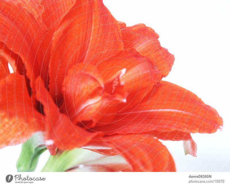 Blümschn Natur Blume rot Farbe