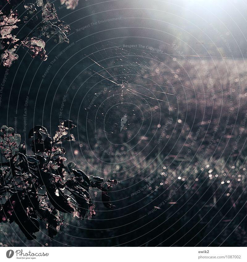 Netz Natur Pflanze Baum Blatt Landschaft dunkel Umwelt Spinnennetz