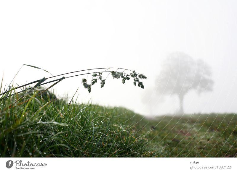morgens früh auf den Feldern Umwelt Natur Landschaft Pflanze Luft Herbst Winter Klima Wetter schlechtes Wetter Nebel Eis Frost Baum Gras Wiese Fußweg Feldrand