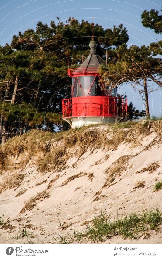 Muss dich doch nicht verstecken Natur Ferien & Urlaub & Reisen Pflanze Landschaft Ferne Strand Umwelt Frühling Küste Freiheit Tourismus Wellen Insel genießen