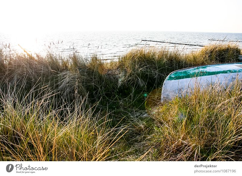 Boot im Dünengras Ferien & Urlaub & Reisen Tourismus Ausflug Ferne Freiheit Umwelt Natur Landschaft Pflanze Frühling Schönes Wetter Wellen Küste Strand Ostsee