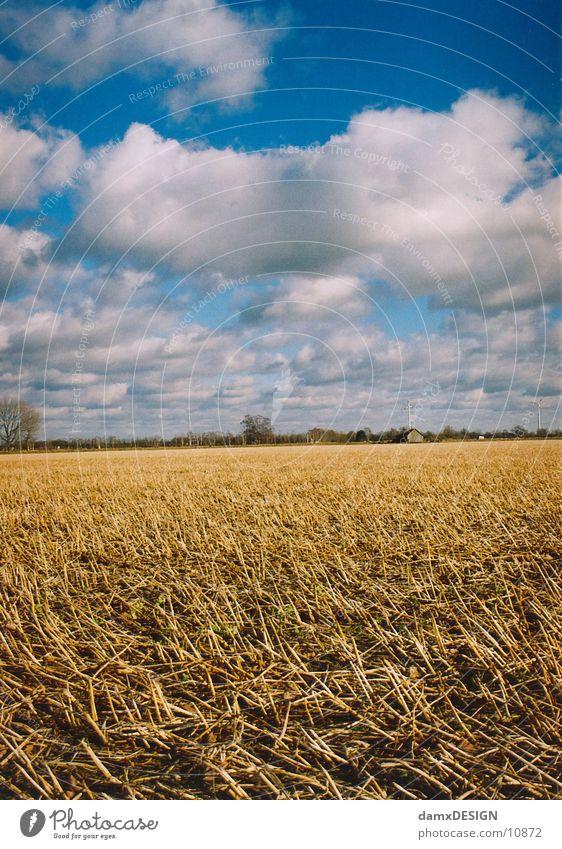 Stoppelfeld Himmel blau Wolken gelb Korn