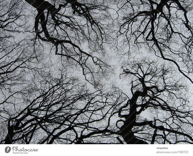 Baumgewirr verzweigt trist Einsamkeit grau Rügen Außenaufnahme grau und schwarz Suche nur eine Richtung? kein Leben der Himmel Irritation