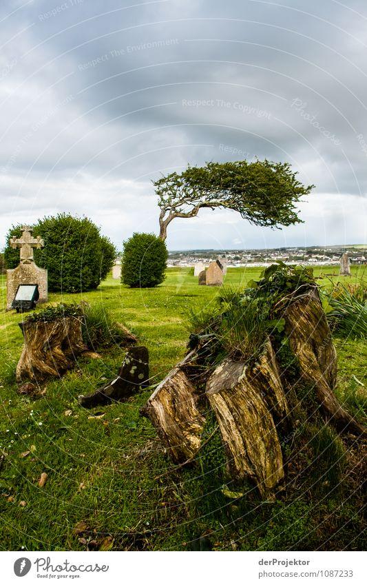 Abgestorben und Gestorben Umwelt Natur Landschaft Pflanze Frühling schlechtes Wetter Baum Sträucher Wiese überbevölkert Sehenswürdigkeit Wahrzeichen Denkmal