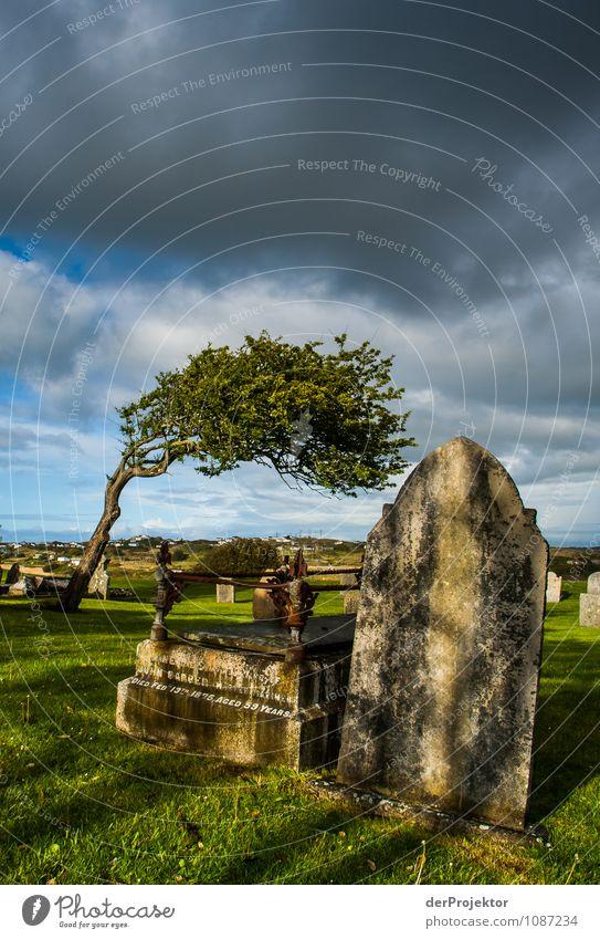 Alles Windschief auf dem Friedhof Natur Pflanze Baum Landschaft Umwelt Traurigkeit Frühling Gefühle Wiese Tod Park Insel Hügel Trauer Frieden Wahrzeichen