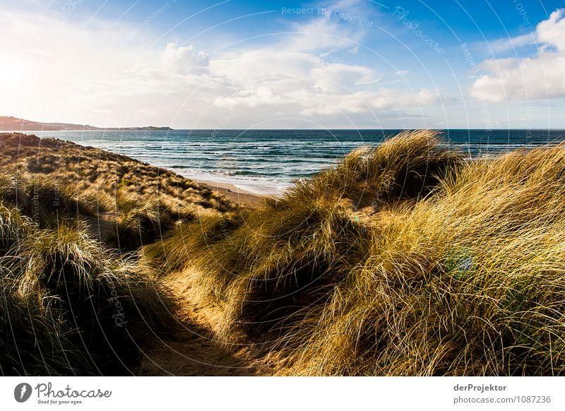 Zum Hereinlegen – Düne in Cornwall Ferien & Urlaub & Reisen Tourismus Ausflug Abenteuer Ferne Freiheit Sommerurlaub wandern Umwelt Natur Landschaft Pflanze Tier