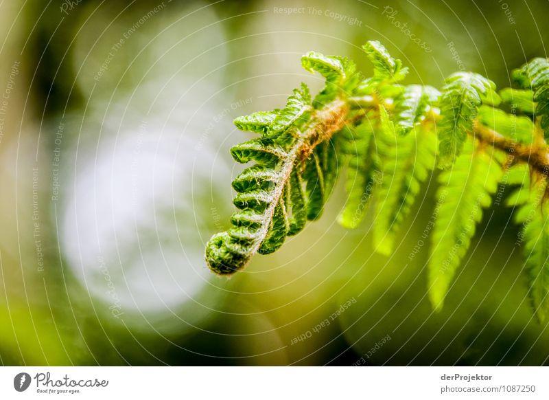 Entfalte dich! Natur Ferien & Urlaub & Reisen Pflanze Wald Umwelt Frühling Gefühle Garten Park Wachstum Kraft Erfolg Insel Schönes Wetter Macht Leidenschaft