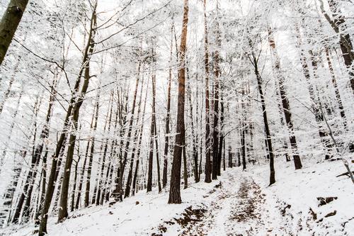 Wald einmal gepudert Natur Ferien & Urlaub & Reisen Pflanze Baum Landschaft Freude Winter Umwelt Berge u. Gebirge Gefühle Schnee Wege & Pfade Eis Tourismus