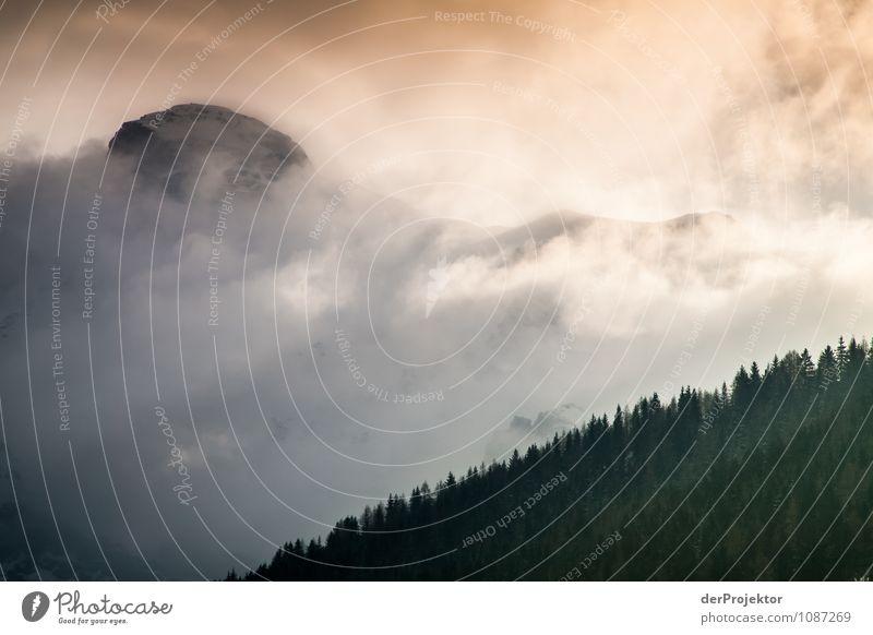 Schönes schlechtes Wetter Natur Ferien & Urlaub & Reisen Pflanze Landschaft Tier Ferne Winter Wald Berge u. Gebirge Umwelt Gefühle Freiheit Eis Tourismus Nebel