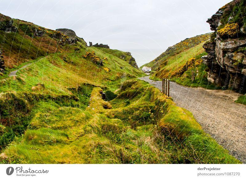Moos, Flechten, Weg = Cornwall Ferien & Urlaub & Reisen Tourismus Ausflug Ferne Freiheit Sightseeing Expedition Camping Fahrradtour wandern Umwelt Natur