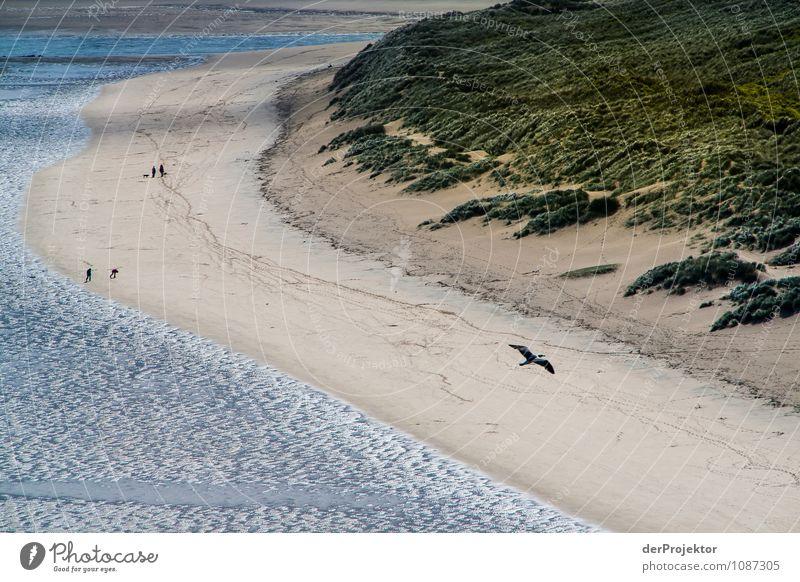 Am Strand bei Ebbe... Natur Ferien & Urlaub & Reisen Pflanze Meer Landschaft Freude Tier Ferne Umwelt Gefühle Küste Frühling Glück Freiheit Tourismus Wellen