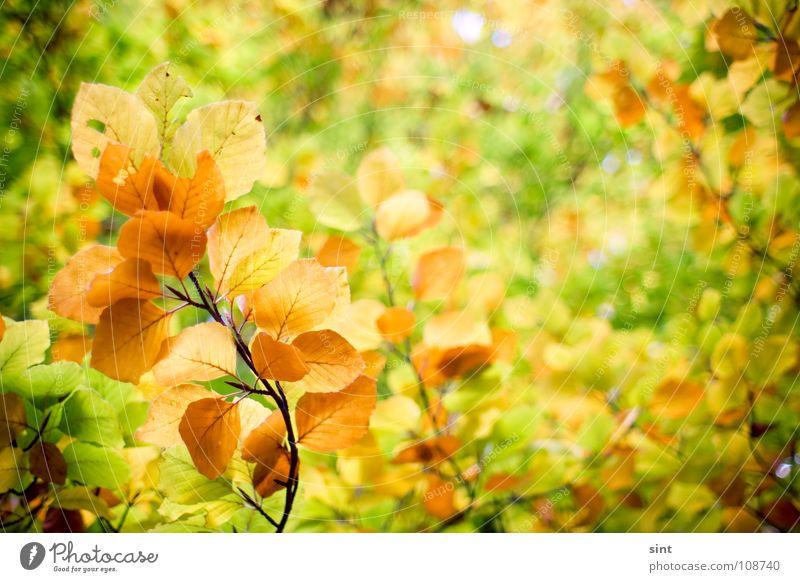 wer malt uns die blätter bunt? Natur Holzmehl gelb November Park Hintergrundbild Herbst Blatt Wald Baum Pflanze grün Oktober schön Strukturen & Formen Unschärfe
