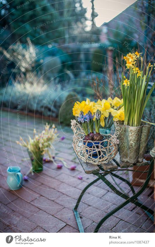 Frühlinge Schönes Wetter Garten Terrasse Lebensfreude Frühlingsgefühle Narzissen Frühlingsblume Backstein Gartenstuhl Vorbereitung Farbfoto Außenaufnahme