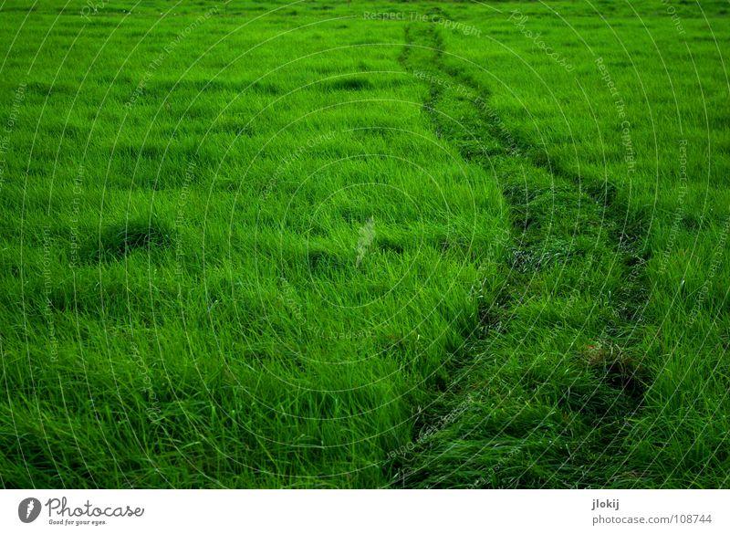 Greenland II Gras grün Spuren Wiese weich wiegen ausgetreten Biotop Biologie Pflanze Spaziergang Sommer Rasen Idylle Erholung sanft Wind Wege & Pfade Weide