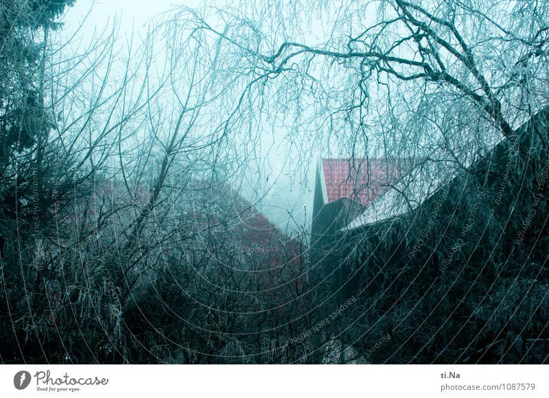 natürlich | es war einmal... blau weiß Baum Haus Winter schwarz kalt Architektur Schnee Gebäude grau Garten Eis Wachstum Nebel Sträucher