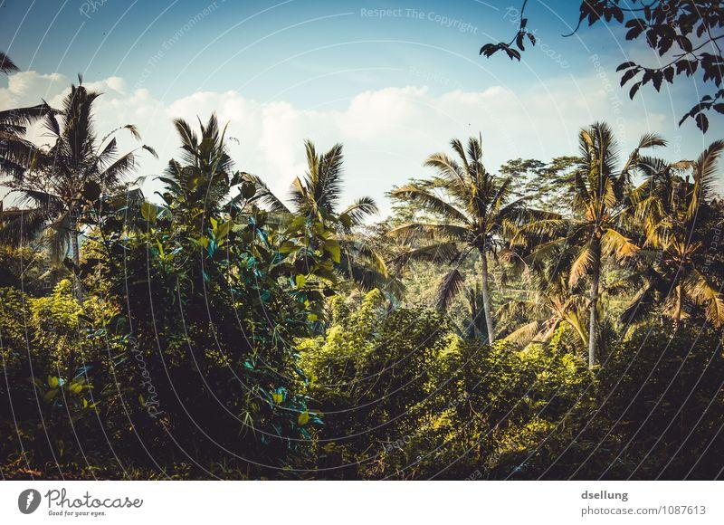 summer dreams. Umwelt Natur Landschaft Pflanze Himmel Wolken Sommer Schönes Wetter Wärme Baum Grünpflanze Palme Urwald natürlich saftig wild blau grün exotisch