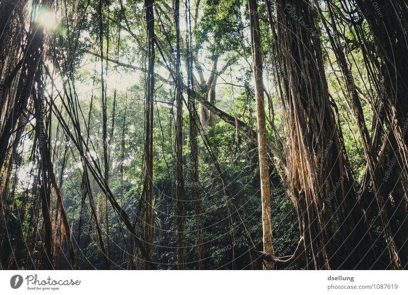 lost in the clockforest. Natur Ferien & Urlaub & Reisen Pflanze grün Sommer Baum Einsamkeit ruhig dunkel Umwelt Wärme natürlich Tod Gesundheit braun Stimmung