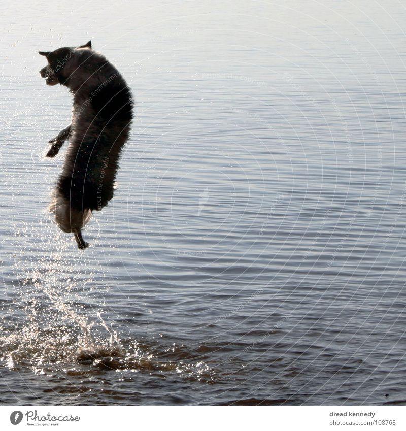 Seehund Hund Ferien & Urlaub & Reisen Sommer Freude Tier Leben Spielen Bewegung Freiheit Gesundheit Schwimmen & Baden frisch Lebensfreude Sonnenbad Haustier
